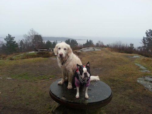 Phoebee og Aida Boes 04.03.14